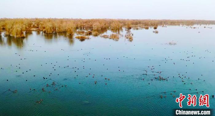 新疆罗布淖尔国家湿地公园迎来大批候鸟西宁污水处理公司