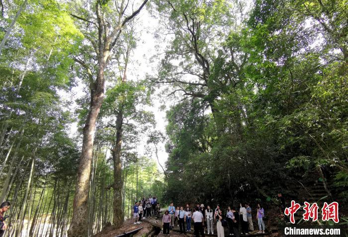 """福建龙岩:""""森林氧吧""""引人体验自然生态之美青海环保公司"""